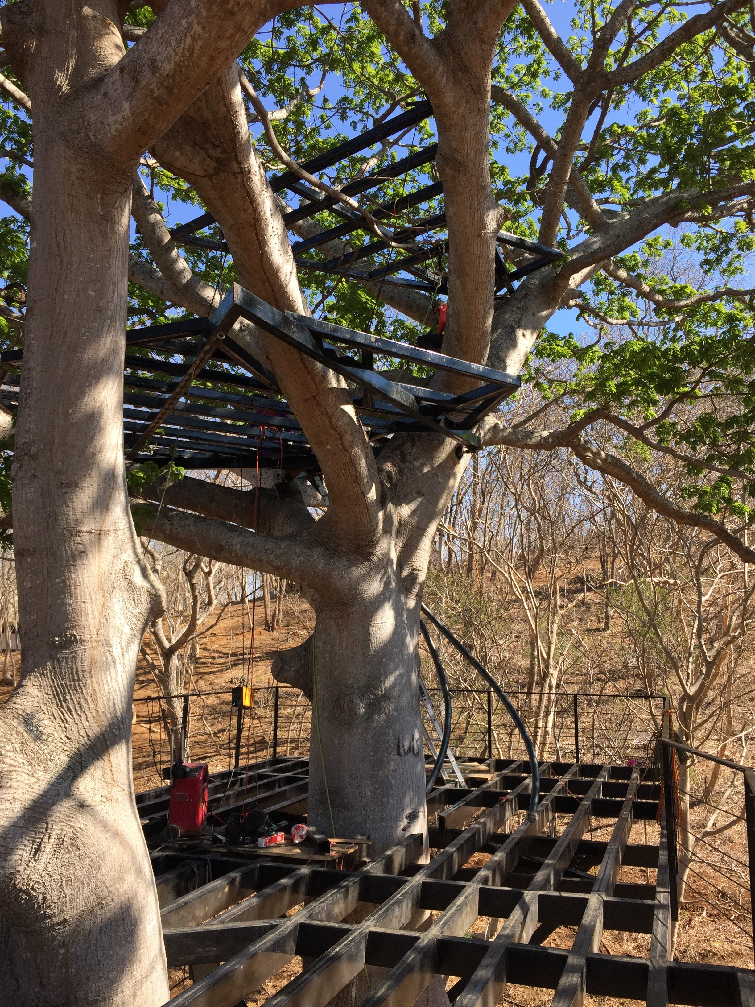 Tree House Plans For Two Trees wander goat travels – spikey trees, and steel beams: a nicaraguan